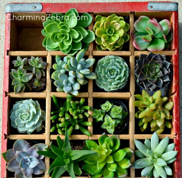 soda crate with succulents