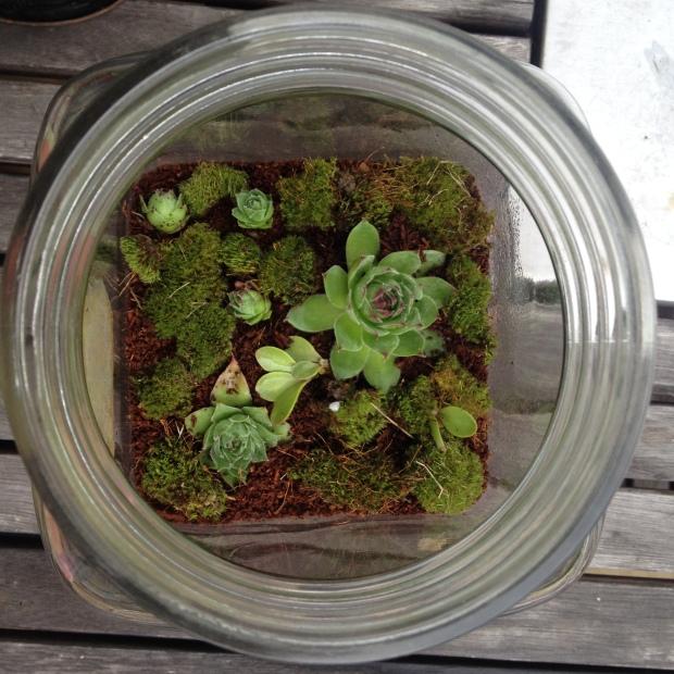 terrarium maison