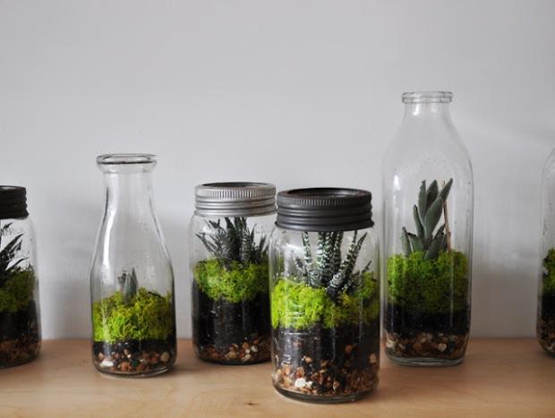terrarium pot masson et bouteille de lait
